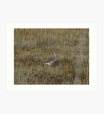 Another curlew Art Print