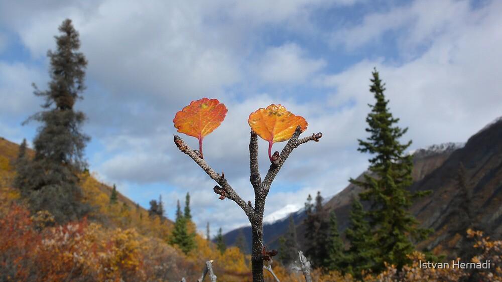 autumn leaves in Kluane Park by Istvan Hernadi