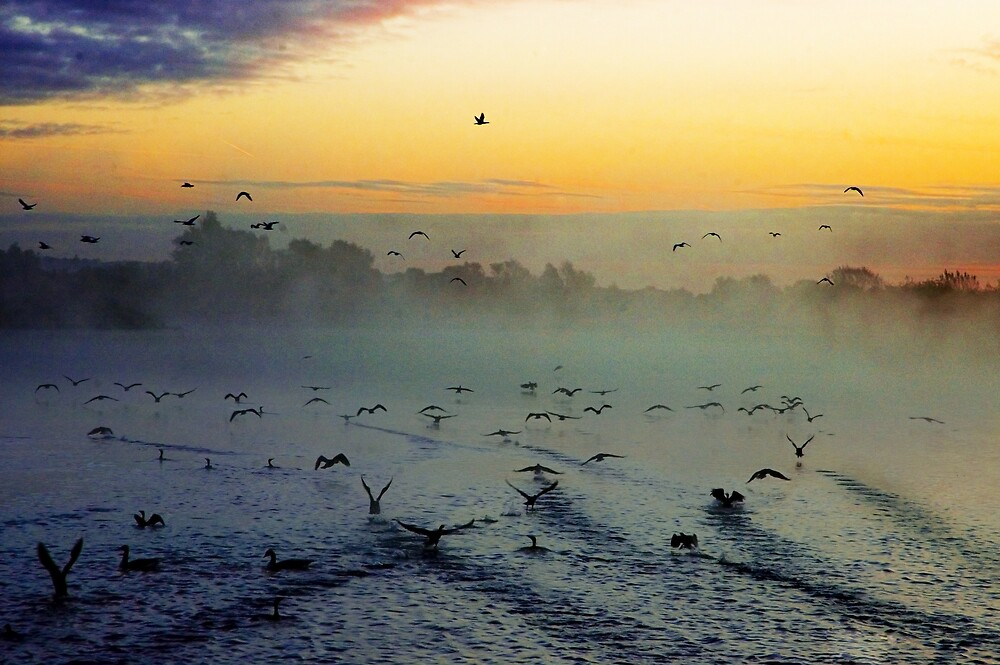 Flight at Fairlop Waters by DAra KHaled