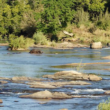 African Stream Wildlife - WildAfrika by WildAfrika