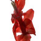 christmas cactus flower II by elisabeth tainsh
