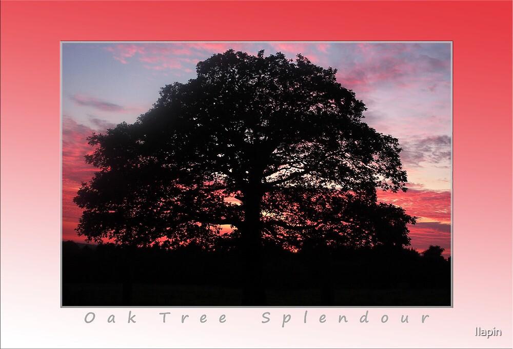 oak tree splendour by Ilapin