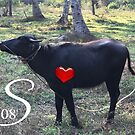 Cow at Kerala 2018 by Sivapriya