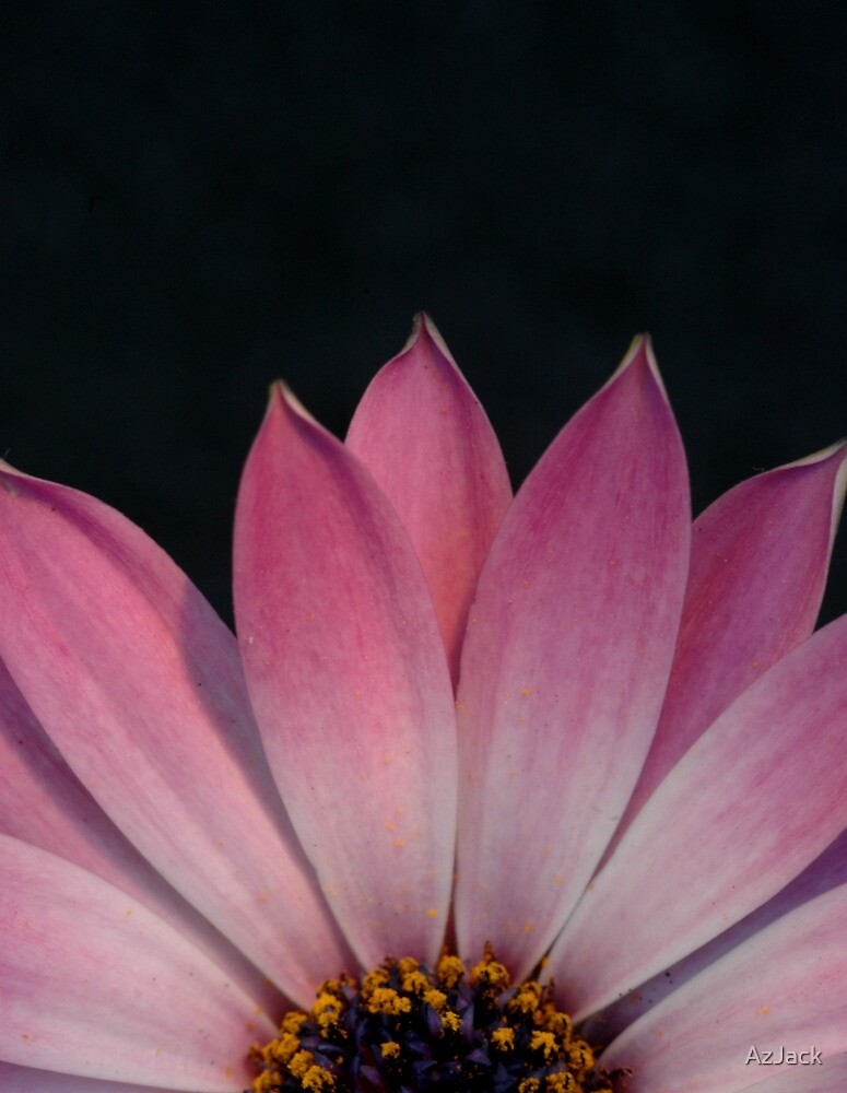 Pink Flower by AzJack