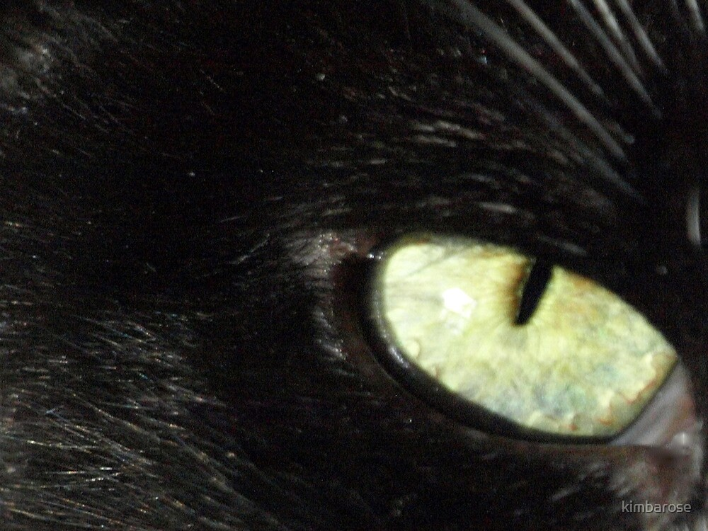 Eye of the Cat by kimbarose