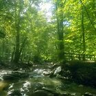 Umstead Park Forest Stream by Benspaperclip