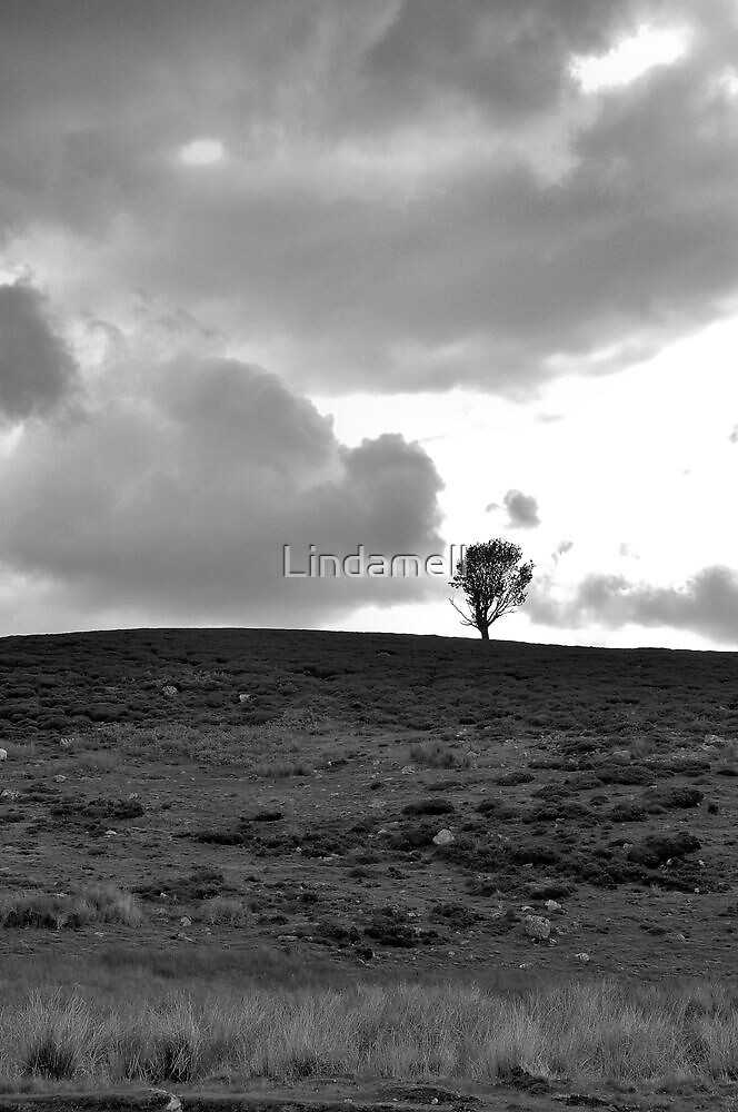 Lone Tree by Lindamell