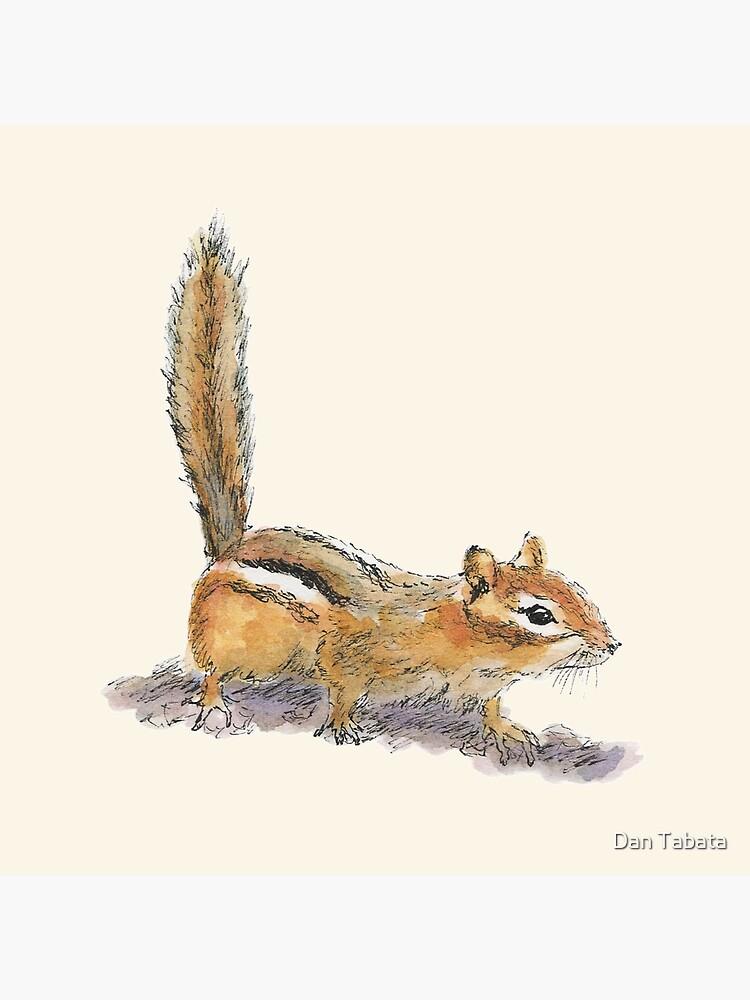 Curious Chipmunk by dmtab