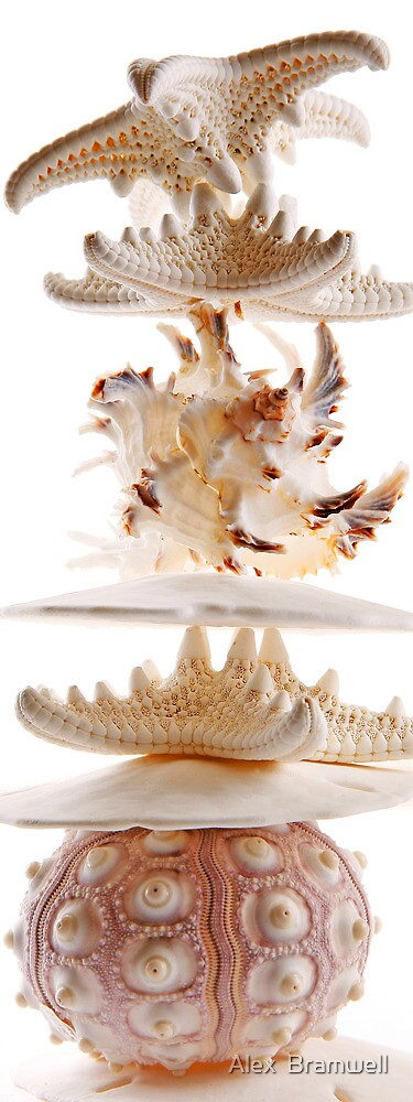 Seashell Stack by Alex  Bramwell