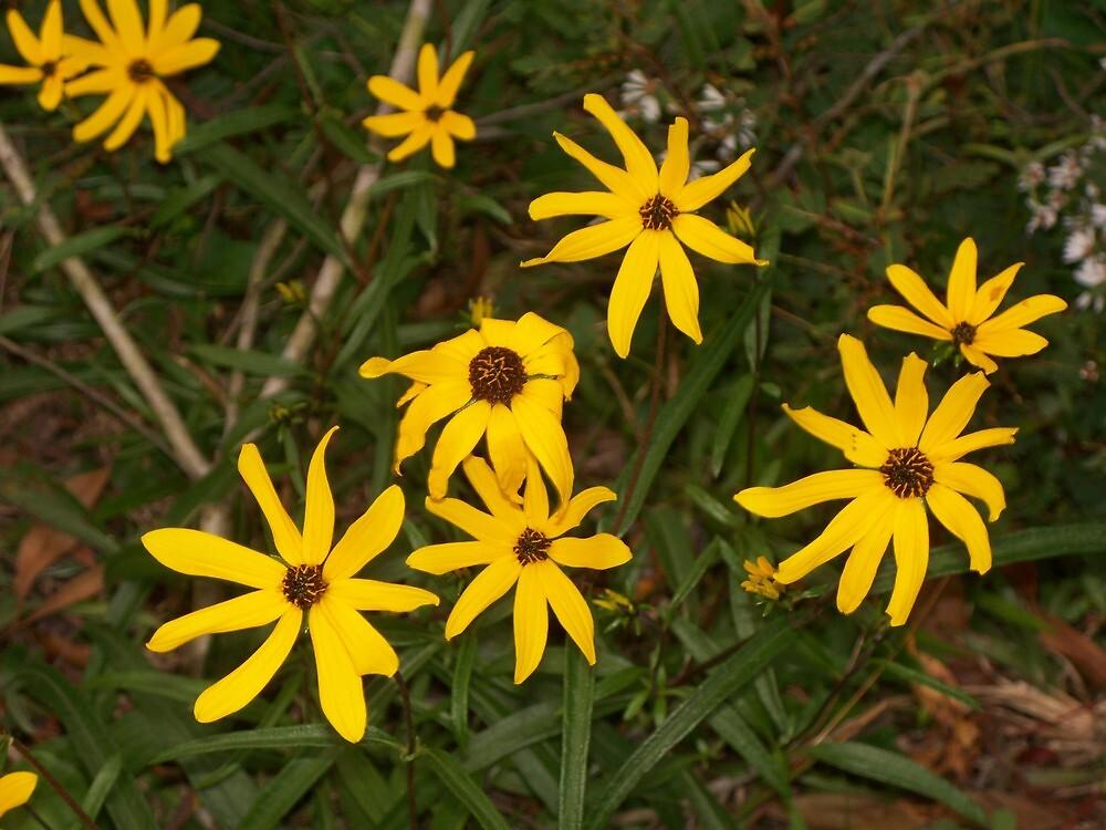 Flowers of Fall by adejiaslife