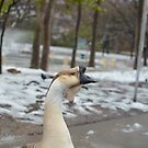 Goose by Asiantiger247