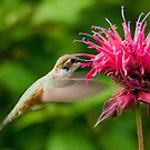Hummingbird & Bee Balm by Tracy Riddell