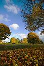 Through the Autumn Leaves by Nigel Bangert