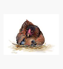 Hen and chickens Photographic Print