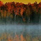 Fall Foliage by Heather King