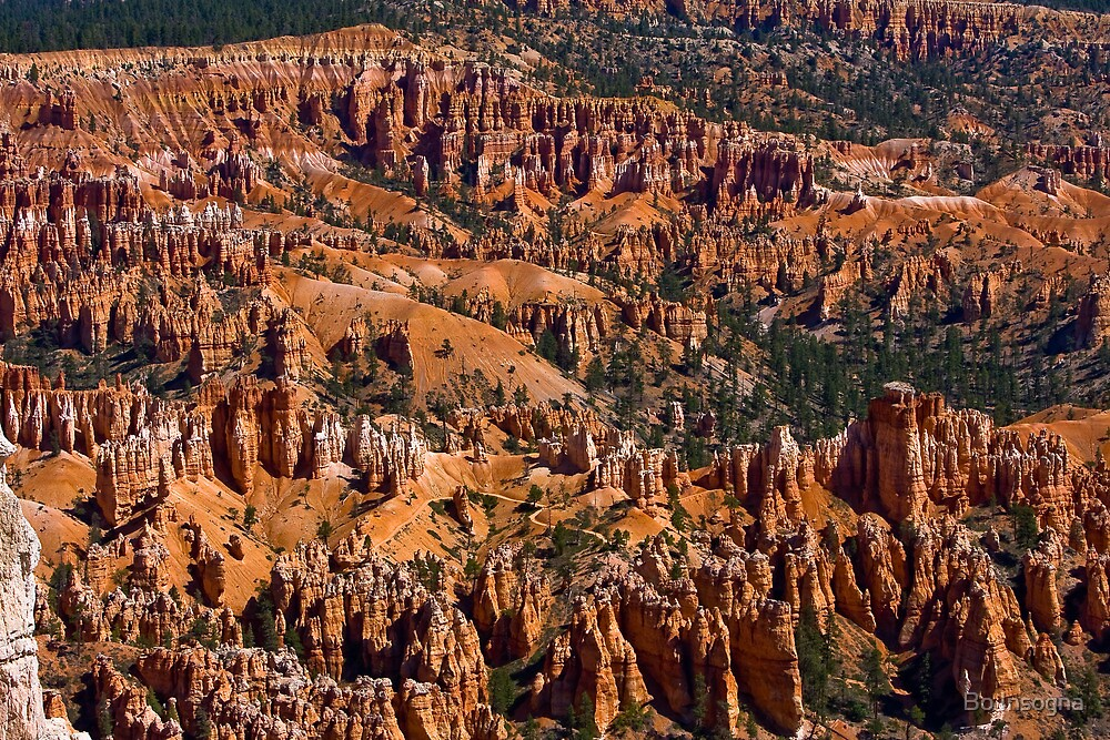 Amazing Bryce Canyon by Bo Insogna
