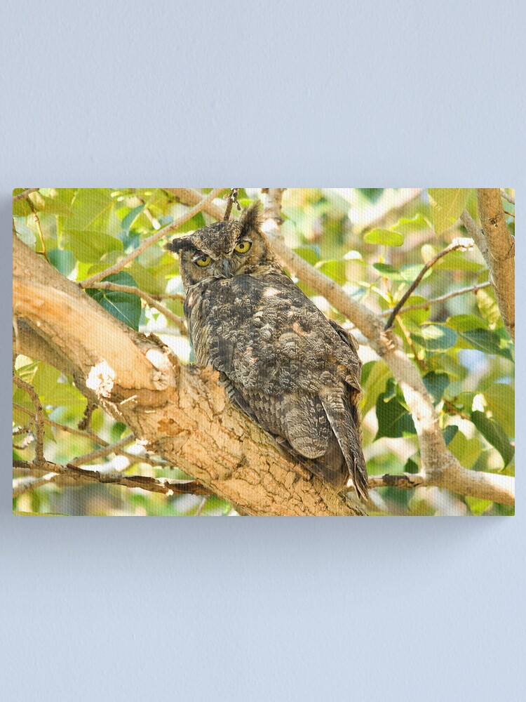 Alternate view of Great Horned Owl Canvas Print