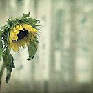 Sorrow by Nicole Goggins