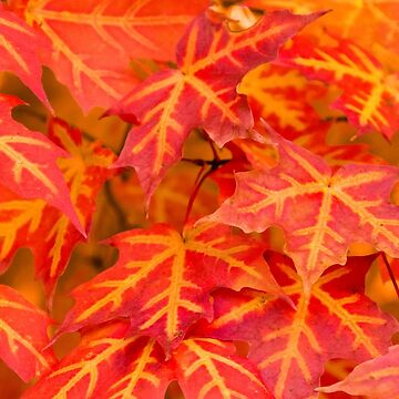 Red and orange leaves by franceslewis