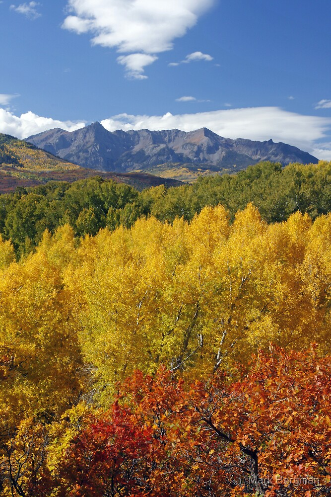 Colorado Fall Colors by Mark Bergman