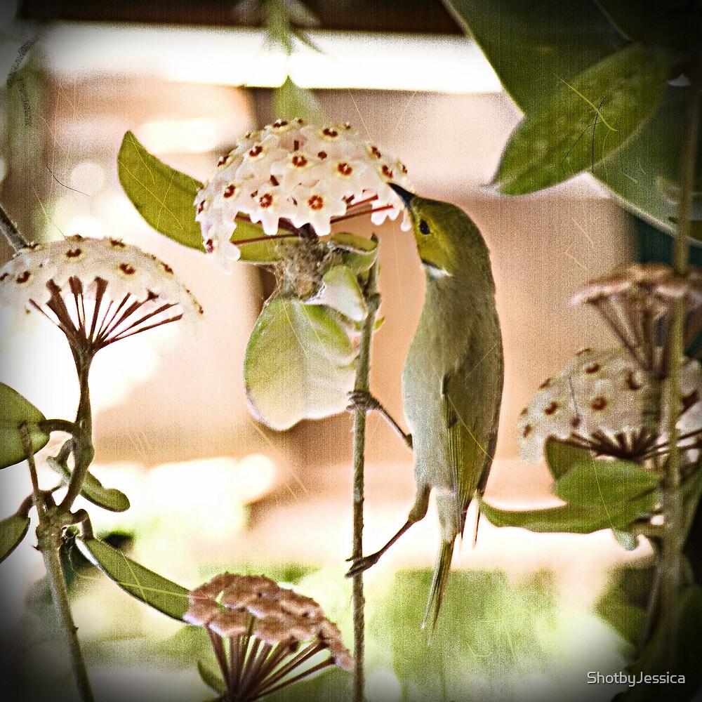 Morning Bird by ShotbyJessica