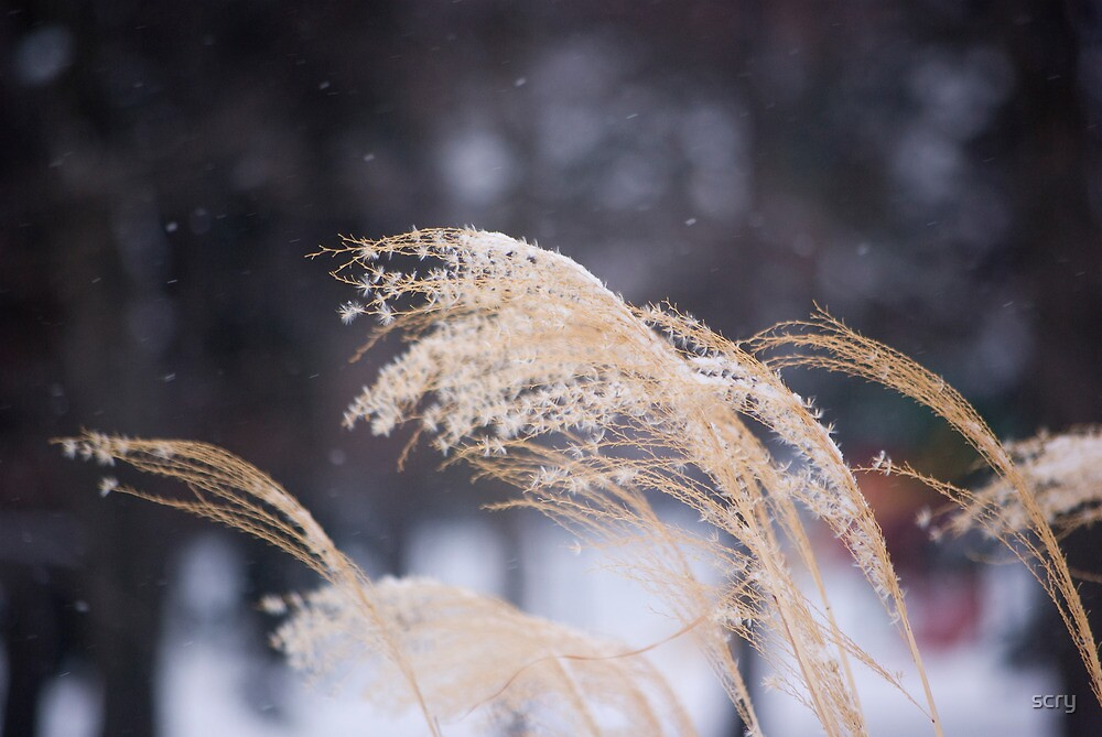 weed in the snow by scry