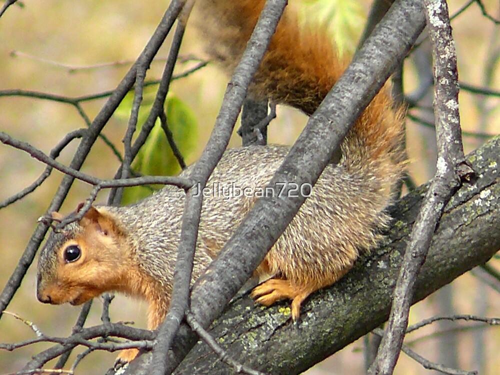 Squirreling around  by Jellybean720