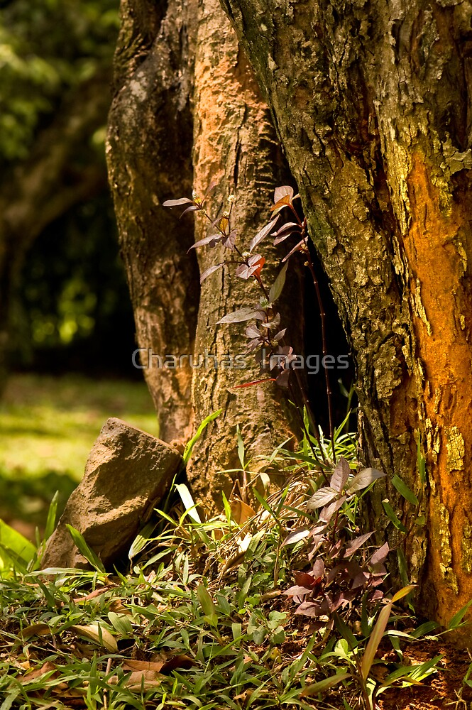 Life under the trees by Charuhas  Images
