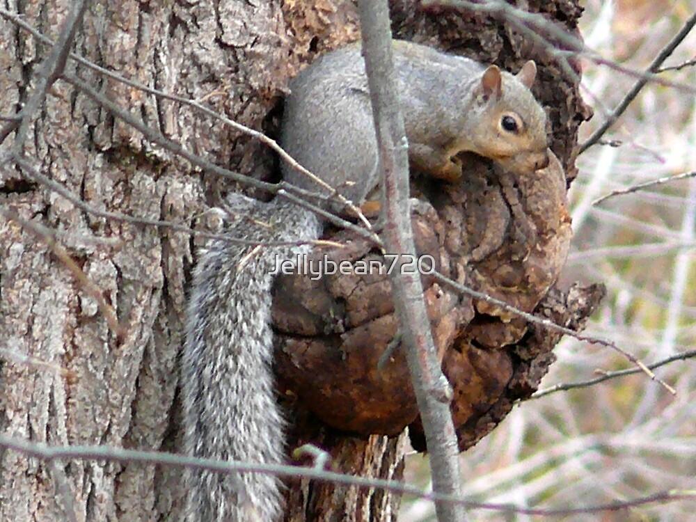 Gray Squirrel  by Jellybean720