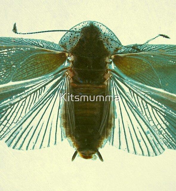 Blue Moth by Kitsmumma