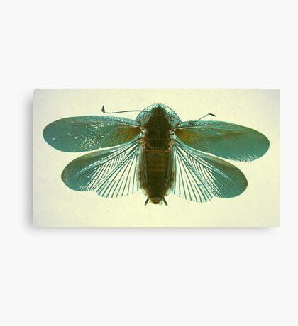 Blue Moth Canvas Print