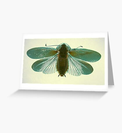 Blue Moth Greeting Card