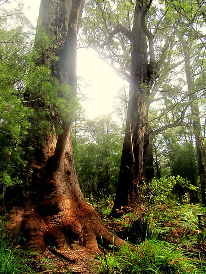 Tingle Tree by Sherene Clow