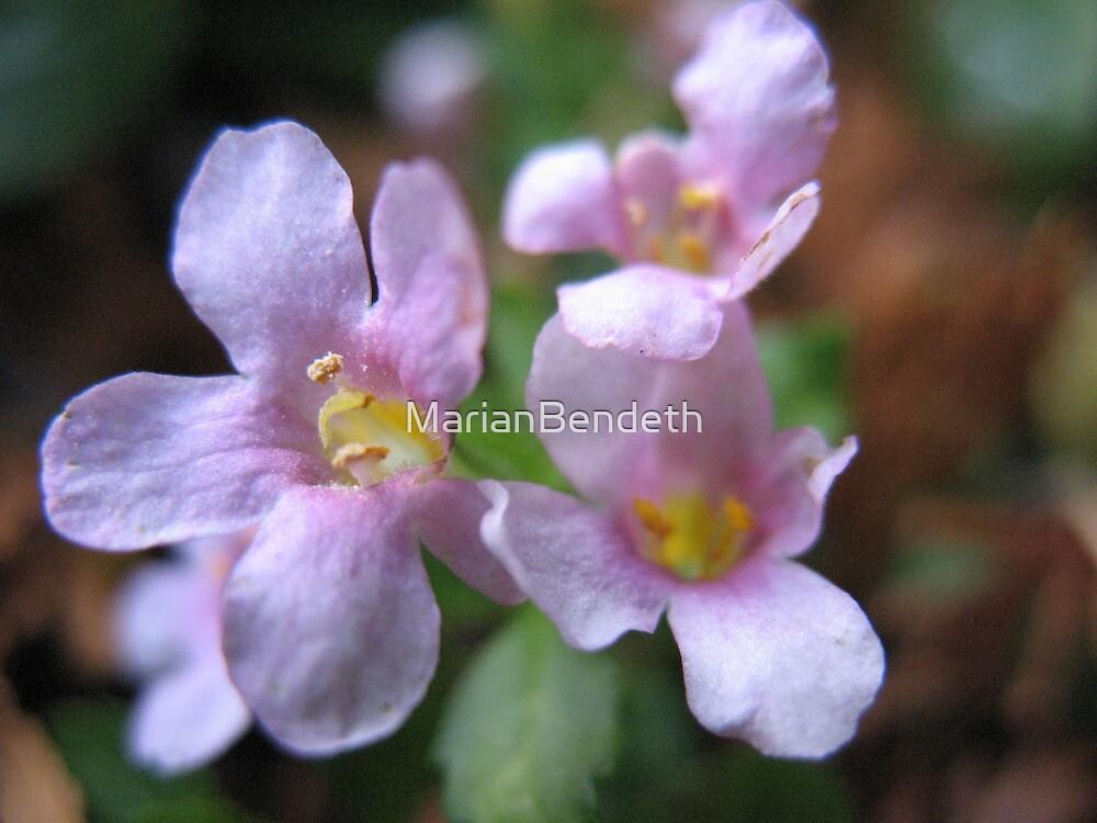 Purple Freeze Flowers by MarianBendeth