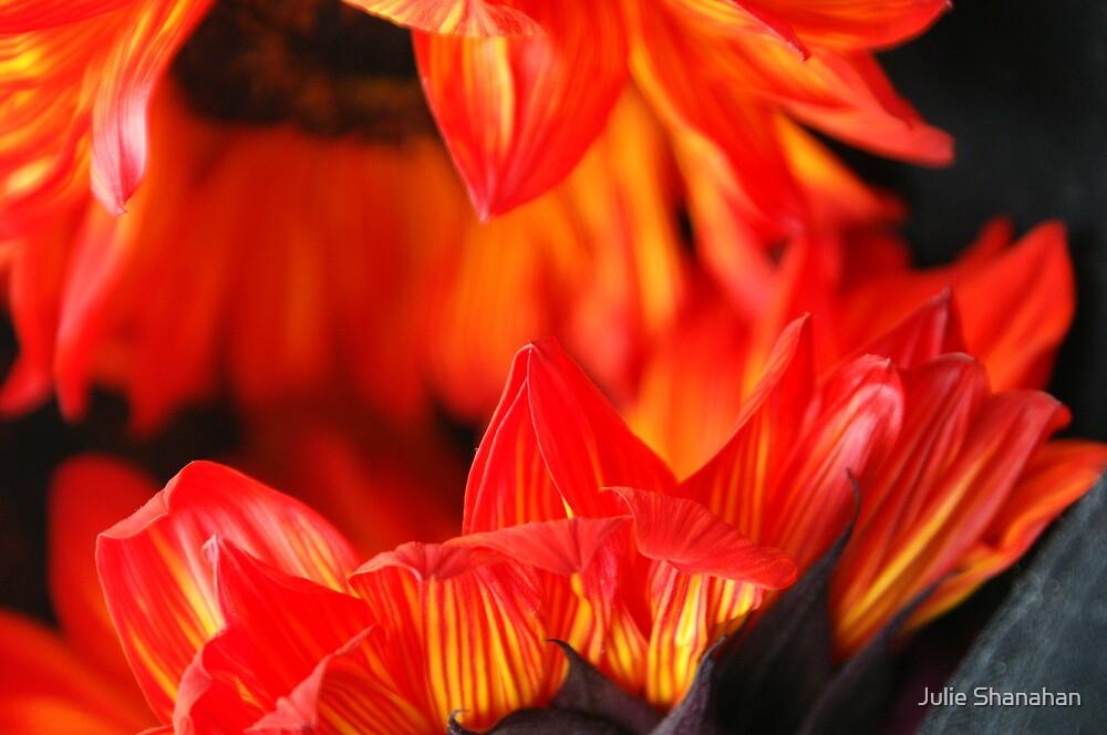 Fall Sunflowers by Julie Shanahan