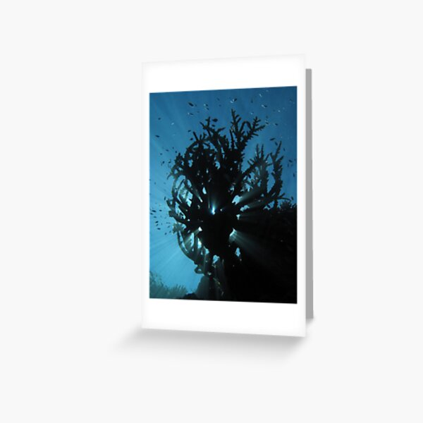 Staghorn Silhouette I Greeting Card