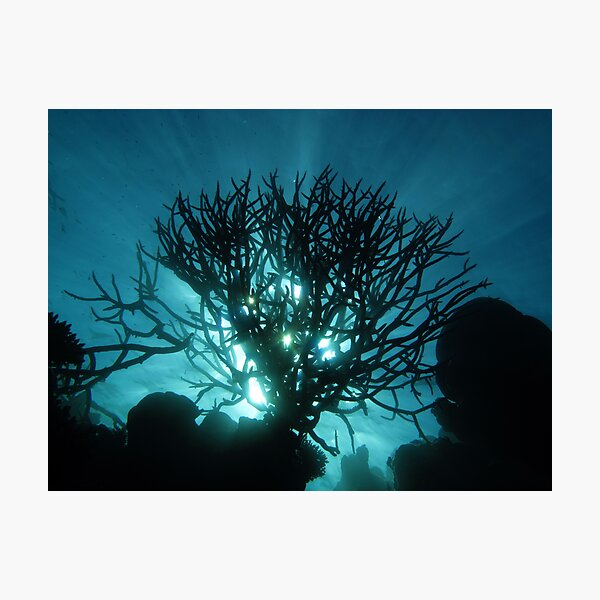 Staghorn Silhouette II Photographic Print