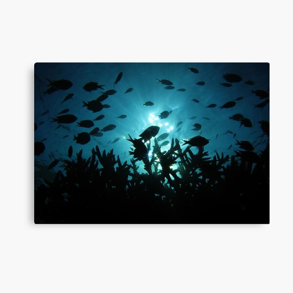 Chromis Silhouette Canvas Print