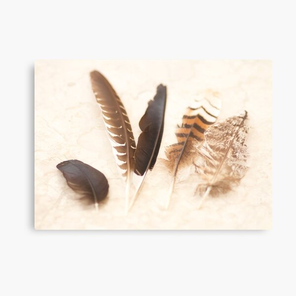 Five Feathers  Metal Print