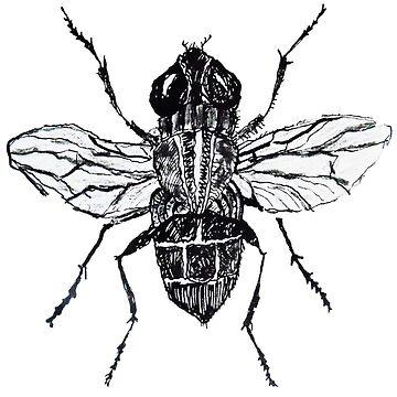 Black fly by Kuhtina