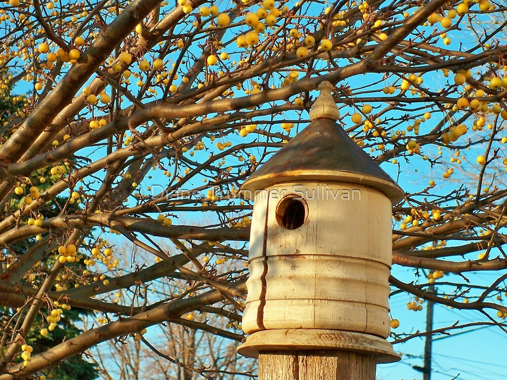 Bird House! by Diane Trummer Sullivan