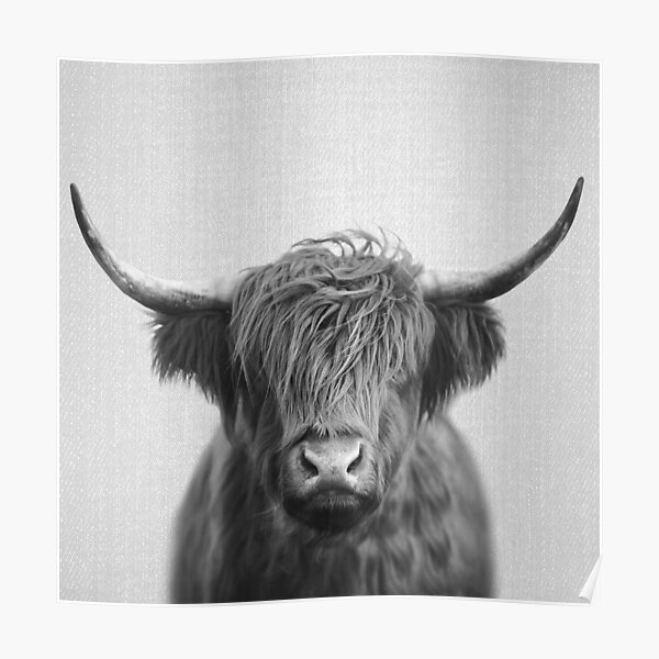 Highland Cow - Schwarz & Weiß Poster