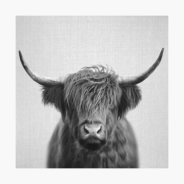 Picture Bull Animal Cattle Scottish Highland Cow Black /& White Framed Print
