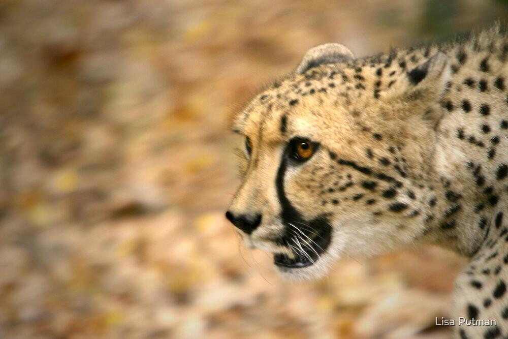 Cheetah Run by Lisa Putman