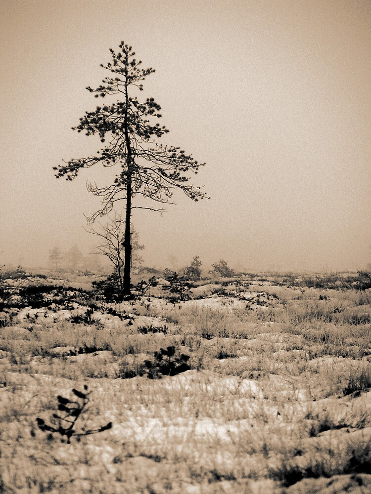 9.11.2009: Swamp, Fog and a Tree by Petri Volanen