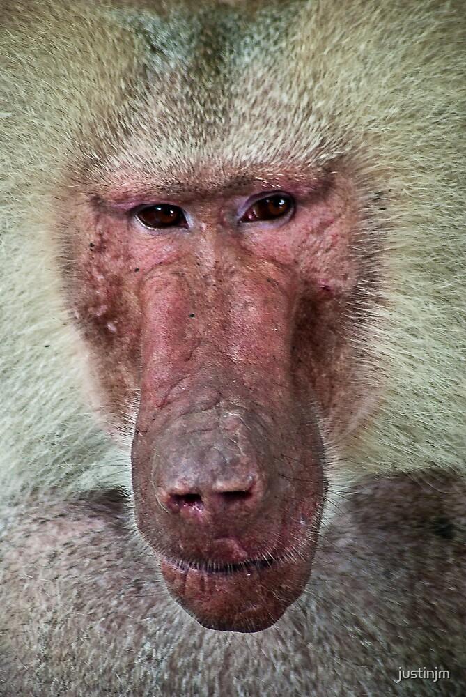 Baboon by justinjm