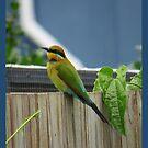 Rainbow Bee Eater 2 by EvieHanlon