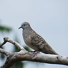 Peaceful Dove by EvieHanlon