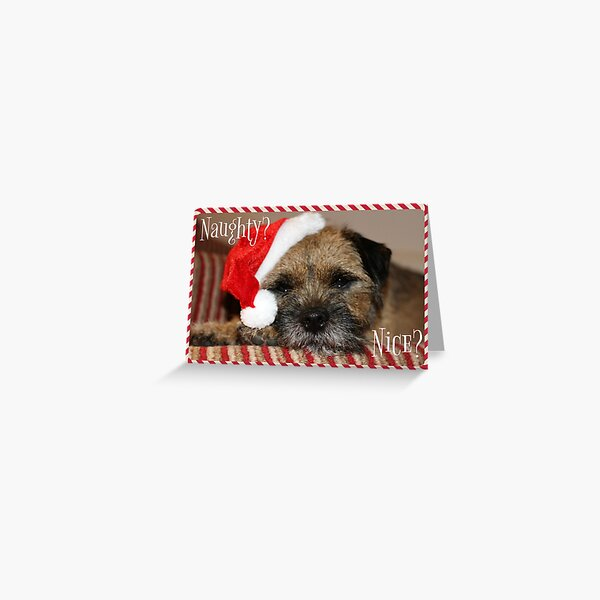 Border Terrier Christmas Card - Naughty? Nice? Greeting Card