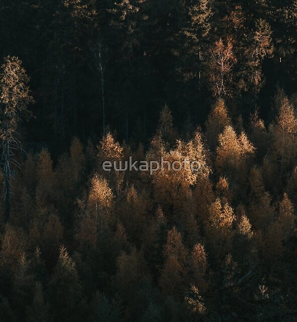 Autumn Fire - Landscape and Nature Photography by ewkaphoto